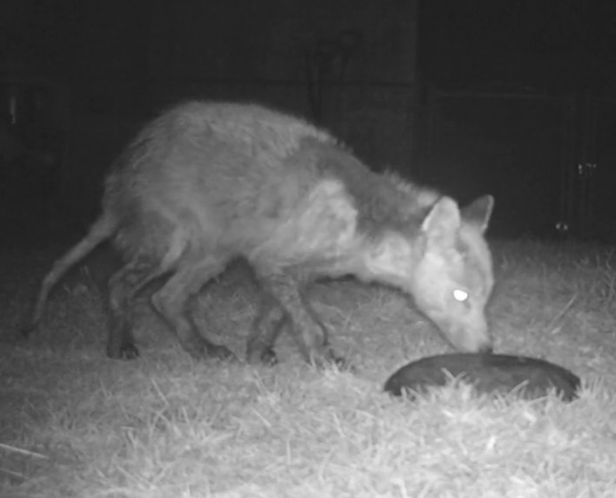 1.24.21-possum-crop-small.jpg